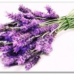 0 mua hoa oai huong 2