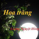 Hoa trăng của Lương Nguyệt Hồng