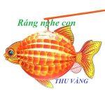 RÁNG NGHE CON! của Thu Vàng
