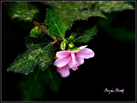 2 hoa dai