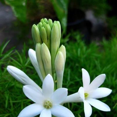 hoa khanh
